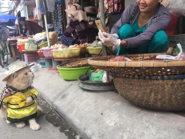 Chú mèo tên Chó đeo kính râm, mặc đồ 'chất lừ' ở chợ Hải Phòng gây sốt trang tin nước ngoài - Ảnh 6.
