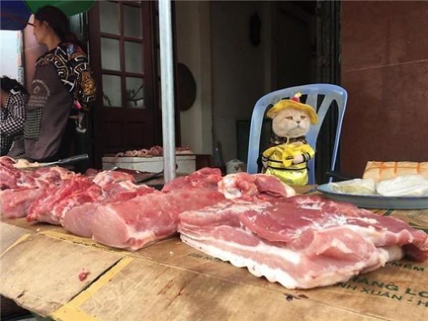 Chú mèo tên Chó đeo kính râm, mặc đồ 'chất lừ' ở chợ Hải Phòng gây sốt trang tin nước ngoài - Ảnh 7.