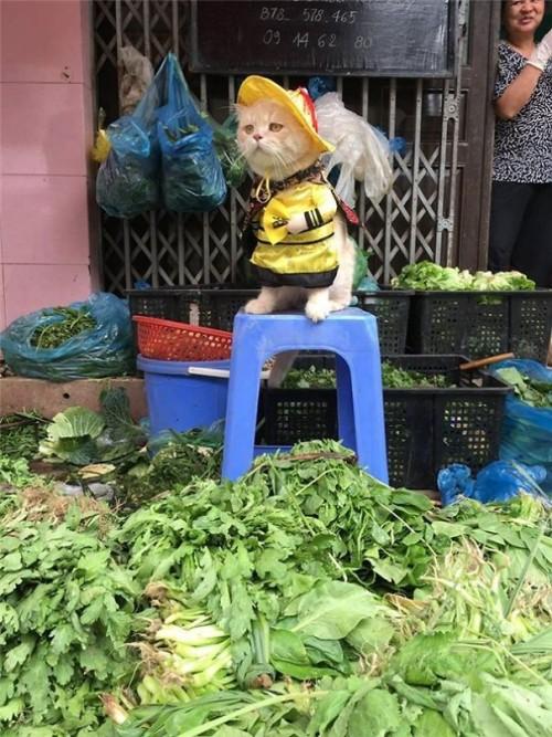 Chú mèo tên Chó đeo kính râm, mặc đồ 'chất lừ' ở chợ Hải Phòng gây sốt trang tin nước ngoài - Ảnh 8.