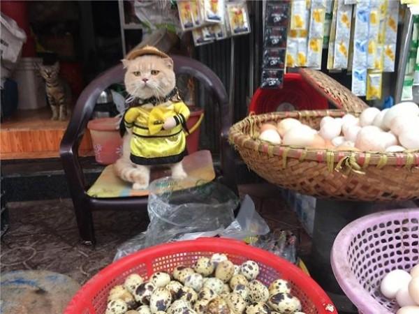 Chú mèo tên Chó đeo kính râm, mặc đồ 'chất lừ' ở chợ Hải Phòng gây sốt trang tin nước ngoài - Ảnh 9.
