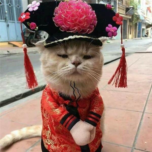 Chú mèo tên Chó đeo kính râm, mặc đồ 'chất lừ' ở chợ Hải Phòng gây sốt trang tin nước ngoài - Ảnh 10.