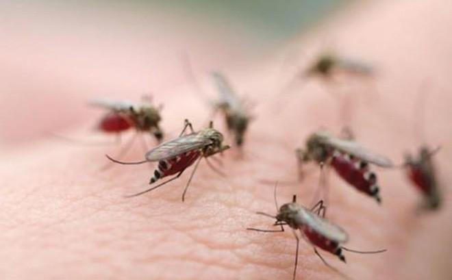 3 người chết, hơn 14.000 người mắc bệnh sốt xuất huyết - Ảnh 1.
