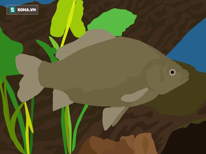 Sự thật đằng sau bí ẩn não cá vàng chỉ nhớ được 3 giây - Ảnh 2.