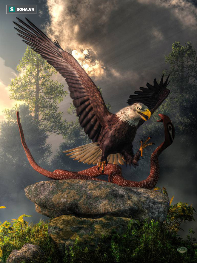Đại bàng ăn rắn đối đầu hổ mang: Nọc độc hay nanh vuốt sẽ chiến thắng? - Ảnh 1.