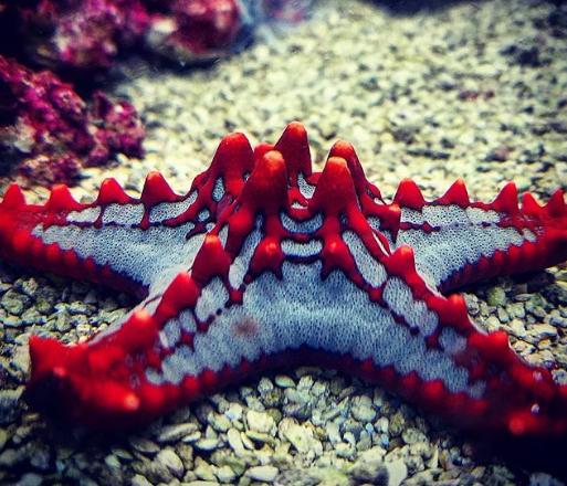 Sở hữu nghìn mắt nhưng lại không có não - đây thực sự là con quái vật kinh khủng nhất đại dương - Ảnh 8.