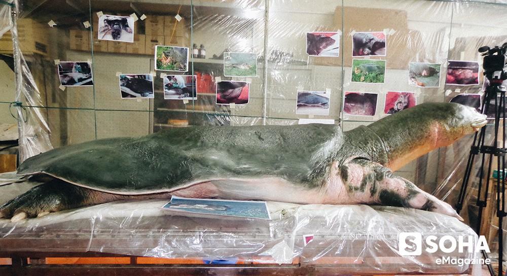 Lần đầu tiết lộ những ngày cuối đời của Cụ Rùa và cuộc lột xác để trở lại Hồ Gươm - Ảnh 14.