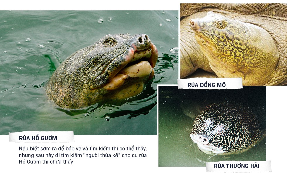 Lần đầu tiết lộ những ngày cuối đời của Cụ Rùa và cuộc lột xác để trở lại Hồ Gươm - Ảnh 13.