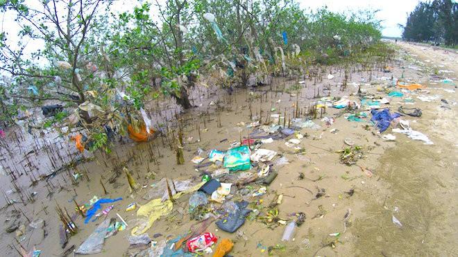 """Rừng """"cây rác"""" lủng lẳng ven sông Lam khiến nhiều người rùng mình - Ảnh 7."""
