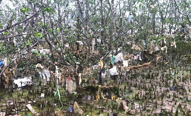 """Rừng """"cây rác"""" lủng lẳng ven sông Lam khiến nhiều người rùng mình - Ảnh 12."""