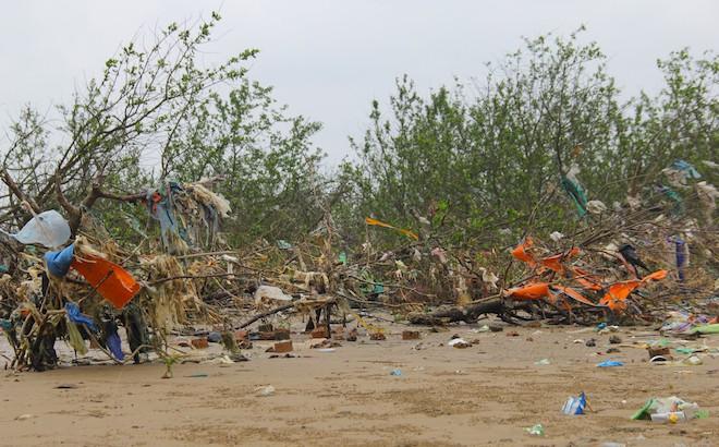 """Rừng """"cây rác"""" lủng lẳng ven sông Lam khiến nhiều người rùng mình - Ảnh 11."""