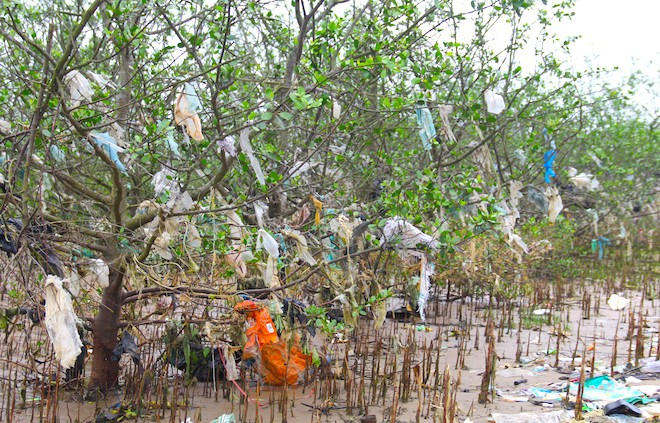 """Rừng """"cây rác"""" lủng lẳng ven sông Lam khiến nhiều người rùng mình - Ảnh 10."""