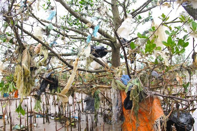 """Rừng """"cây rác"""" lủng lẳng ven sông Lam khiến nhiều người rùng mình - Ảnh 8."""