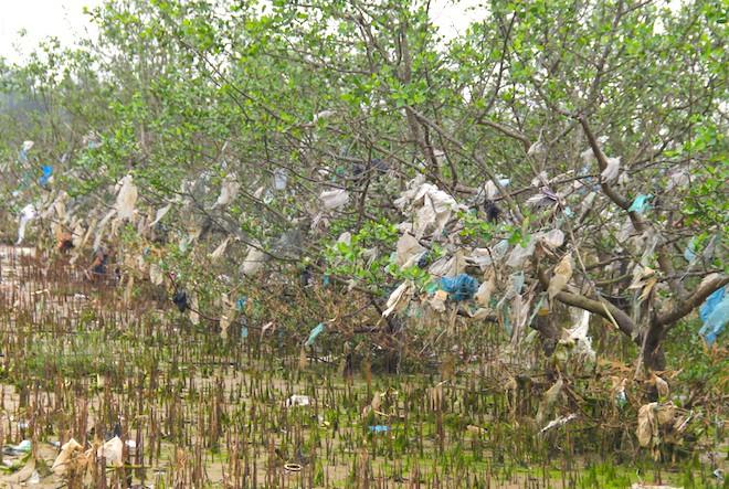 """Rừng """"cây rác"""" lủng lẳng ven sông Lam khiến nhiều người rùng mình - Ảnh 9."""