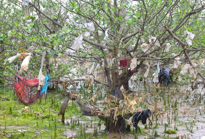 """Rừng """"cây rác"""" lủng lẳng ven sông Lam khiến nhiều người rùng mình - Ảnh 5."""