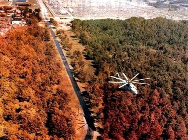 Chernobyl là thảm họa của con người, nhưng lại là tin vui với động vật hoang dã trong khu vực này - ảnh 2