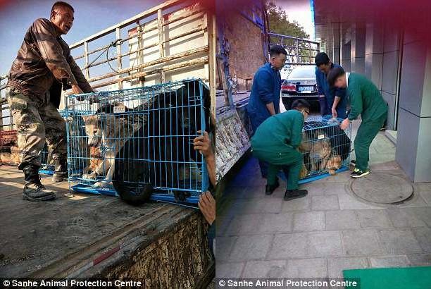 Thực hư clip chú chó ứa nước mắt vì được giải cứu trước khi bị lên đĩa - Ảnh 4.
