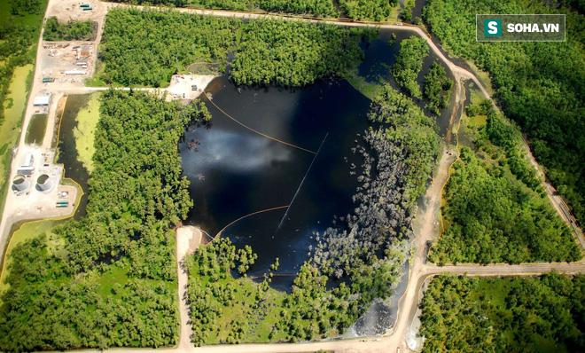 Bí mật tại đầm lầy nuốt cây khiến Cục Khảo sát Địa chất Mỹ đau đầu - Ảnh 2.