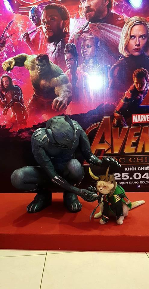 Khách mời đặc biệt gây sốt hơn cả sao Việt tại họp báo phim bom tấn Avengers - Ảnh 5.