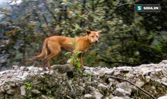 Phát hiện loài chó nguyên thủy ở đỉnh núi hẻo lánh nhất thế giới! - Ảnh 1.