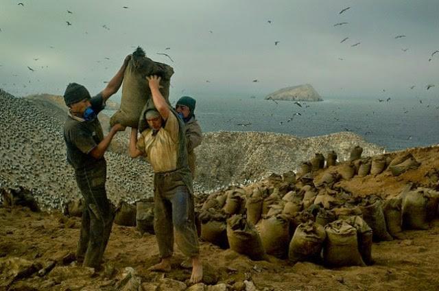 Hành trình khắc nghiệt tại hòn đảo làm giàu bằng phân chim, tạo cơn sốt khắp châu Âu - Ảnh 2.