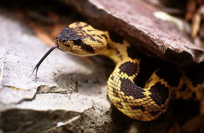 Xâm nhập lãnh địa bầy rắn độc: Không ngờ đụng độ tử thần ngay trong đêm - Ảnh 11.
