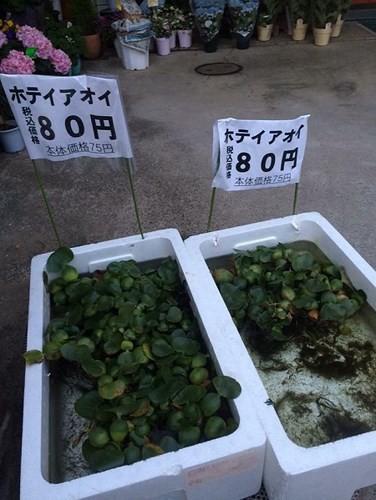 """Những nông sản Việt được bán với giá cao đến """"khó tin"""" trên thế giới - Ảnh 11."""