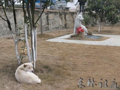 Chuyện cảm động về khoảnh khắc chú chó hy sinh cứu hàng chục người và đàn con nhỏ - Ảnh 4.