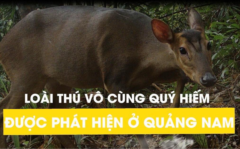 Loài thú vô cùng quý hiếm được phát hiện ở Quảng Nam: