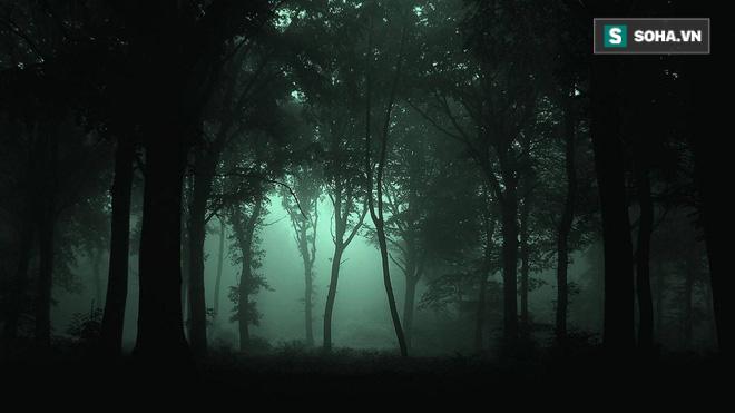 Đi rừng mà lạc vào khu vực này, có thể đột tử ngay tức khắc! - Ảnh 3.