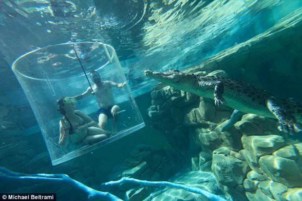 Cầu hôn bạn gái trong Lồng tử thần giữa hai con cá sấu khổng lồ - Ảnh 1.
