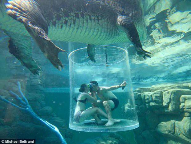Cầu hôn bạn gái trong Lồng tử thần giữa hai con cá sấu khổng lồ - Ảnh 2.