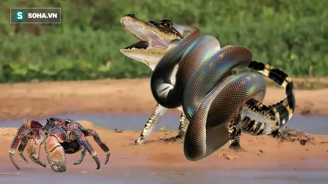 Mải mê đuổi theo con mồi, cá sấu bất ngờ bị trăn khổng lồ làm thịt - Ảnh 1.