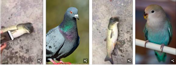 Chú cá đầu chim kỳ dị đang làm nổi sóng cư dân mạng này liệu có thật? - Ảnh 2.