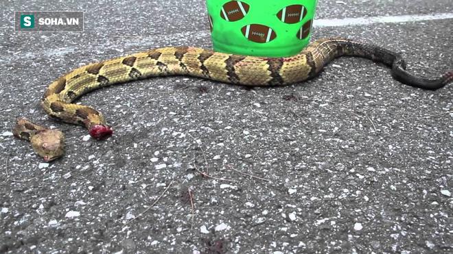 Dù đầu lìa khỏi thân, rắn độc vẫn ngóc dậy cắn người thập tử nhất sinh! - ảnh 1