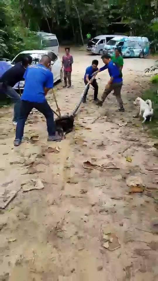 CLIP: Nhóm người vật lộn giải cứu chú chó bị rắn khổng lồ nuốt - Ảnh 2.