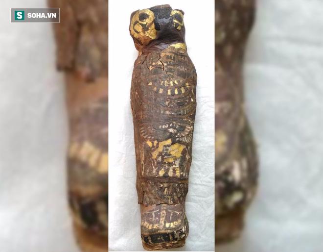 Chụp cắt lớp xác ướp chim ưng Ai Cập bỗng nhiên phát hiện bất ngờ lớn - Ảnh 2.