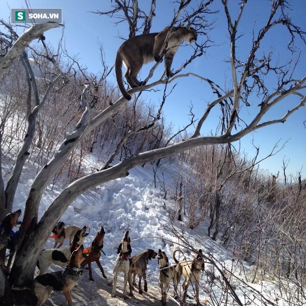 Leo lên cây cao truy sát báo sư tử, chó săn dính đòn đau nhớ đời - Ảnh 1.