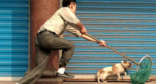 Bị lây bệnh dại, trộm chó quay sang bắt đền, khổ chủ đăng đàn nhờ dân mạng 'mách nước' - ảnh 2