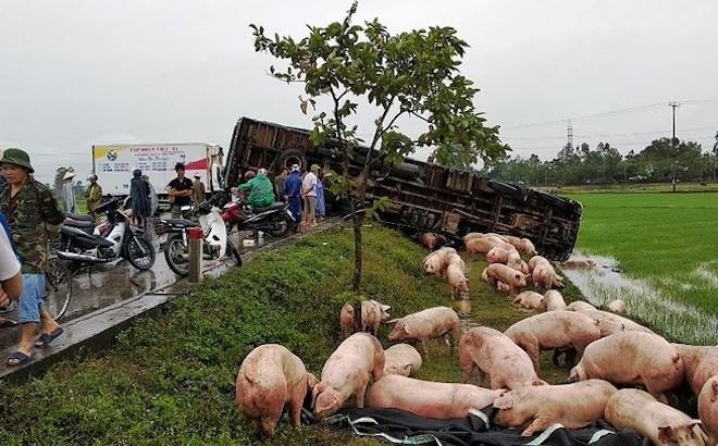 Xe tải tông ô tô đông lạnh, hàng trăm con heo rơi xuống đường  - Ảnh 3.