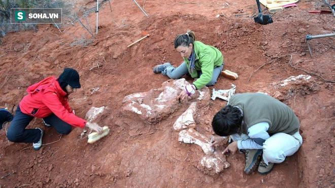 Phát hiện hóa thạch khổng lồ mới: Khủng long còn lớn hơn tưởng tượng - Ảnh 1.