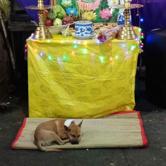 Hình ảnh xúc động: Chủ vừa qua đời, chú chó nhỏ buồn bã bỏ cả ăn để túc trực bên linh cữu không chịu rời - Ảnh 1.