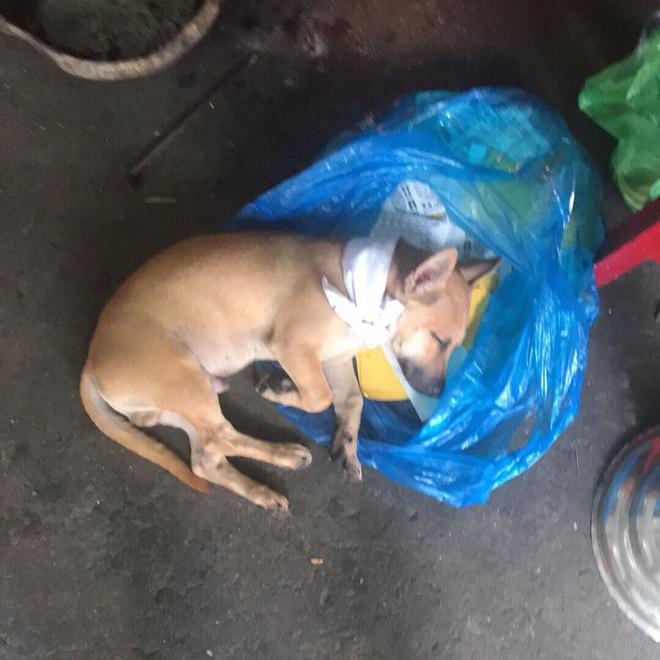 Hình ảnh xúc động: Chủ vừa qua đời, chú chó nhỏ buồn bã bỏ cả ăn để túc trực bên linh cữu không chịu rời - Ảnh 3.