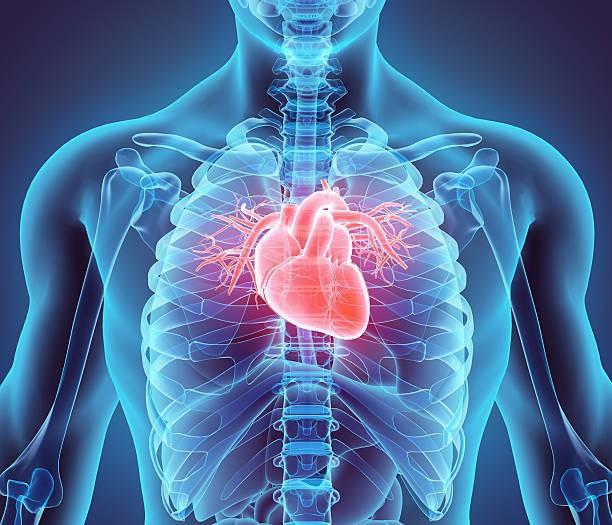 Ung thư có hàng trăm loại nhưng hiếm khi ta nghe nói tới ung thư tim - vì sao? - Ảnh 1.