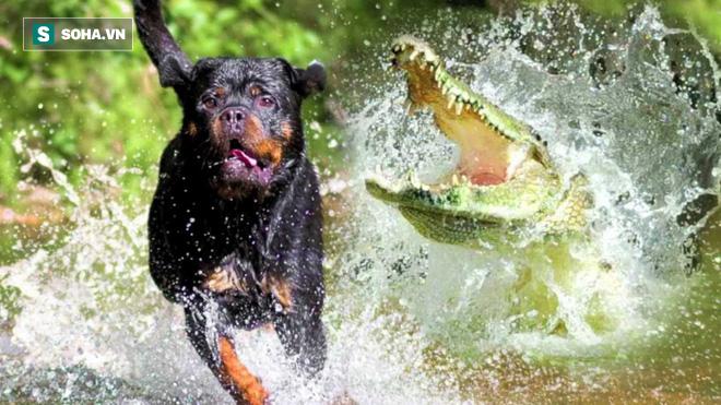 Chú chó đang tung tăng dưới nước, phút trước phút sau đã không thấy đâu - Ảnh 1.
