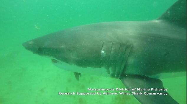 Cá mập lao lên tấn công nhà khoa học và khung cảnh như phim kinh dị ngay sau đó - Ảnh 1.
