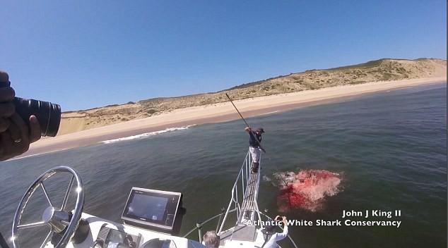 Cá mập lao lên tấn công nhà khoa học và khung cảnh như phim kinh dị ngay sau đó - Ảnh 5.
