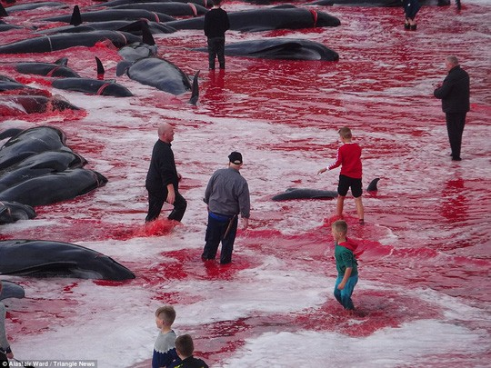 Hãi hùng cảnh tàn sát cá voi, nước biển chuyển màu máu - Ảnh 1.