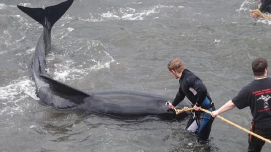 Hãi hùng cảnh tàn sát cá voi, nước biển chuyển màu máu - Ảnh 2.