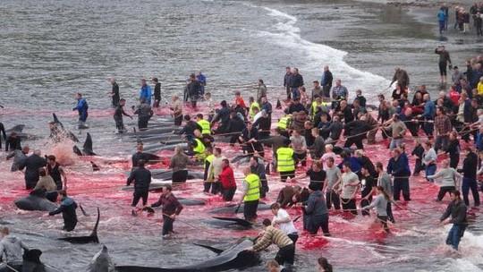 Hãi hùng cảnh tàn sát cá voi, nước biển chuyển màu máu - Ảnh 3.