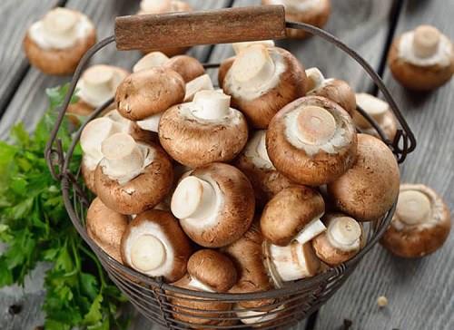 Những loại nấm, rong biển hỗ trợ điều trị ung thư hiệu quả - Ảnh 3.